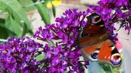 1280_Butterfly on a Flower