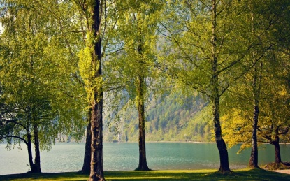 1280_Trees by the Lake